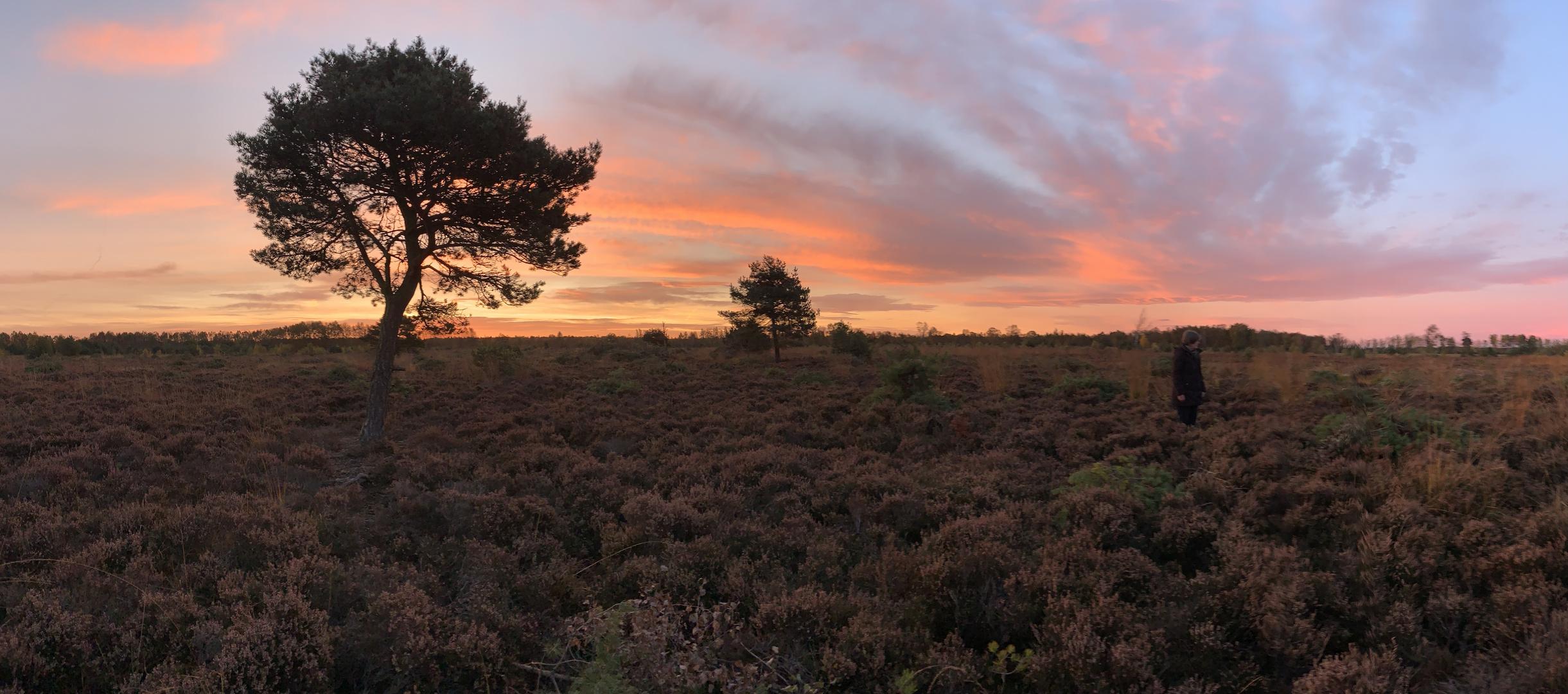 Morgens im Moor