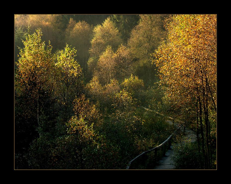 """Morgens im Moorwäldchen - auf dem Holzweg... (7. der Serie  """"Mecklenbruch"""")"""