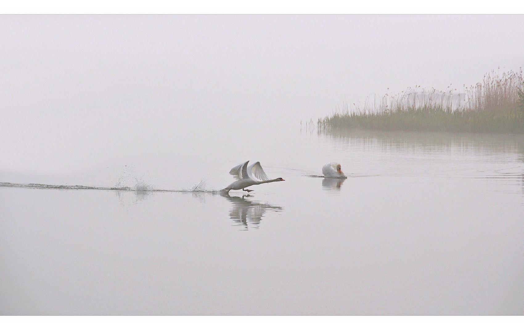 # Morgen`s im Nebel -3-