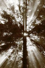 Morgens im Wald....