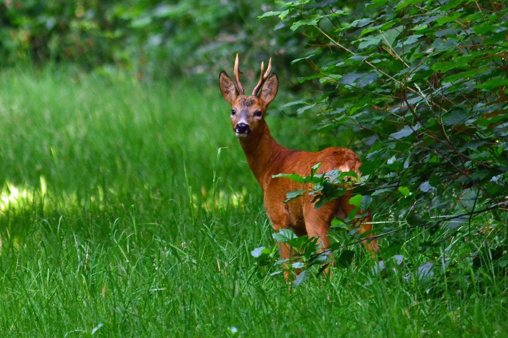 Morgens im Wald...