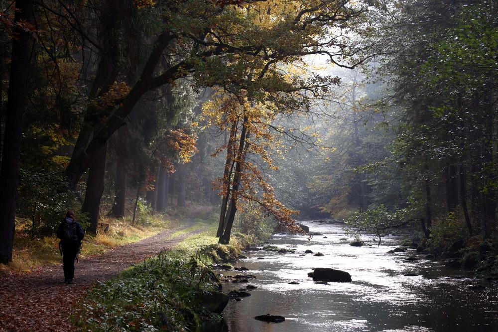 Morgens im Wald / Oberösterreich Oktober 2008