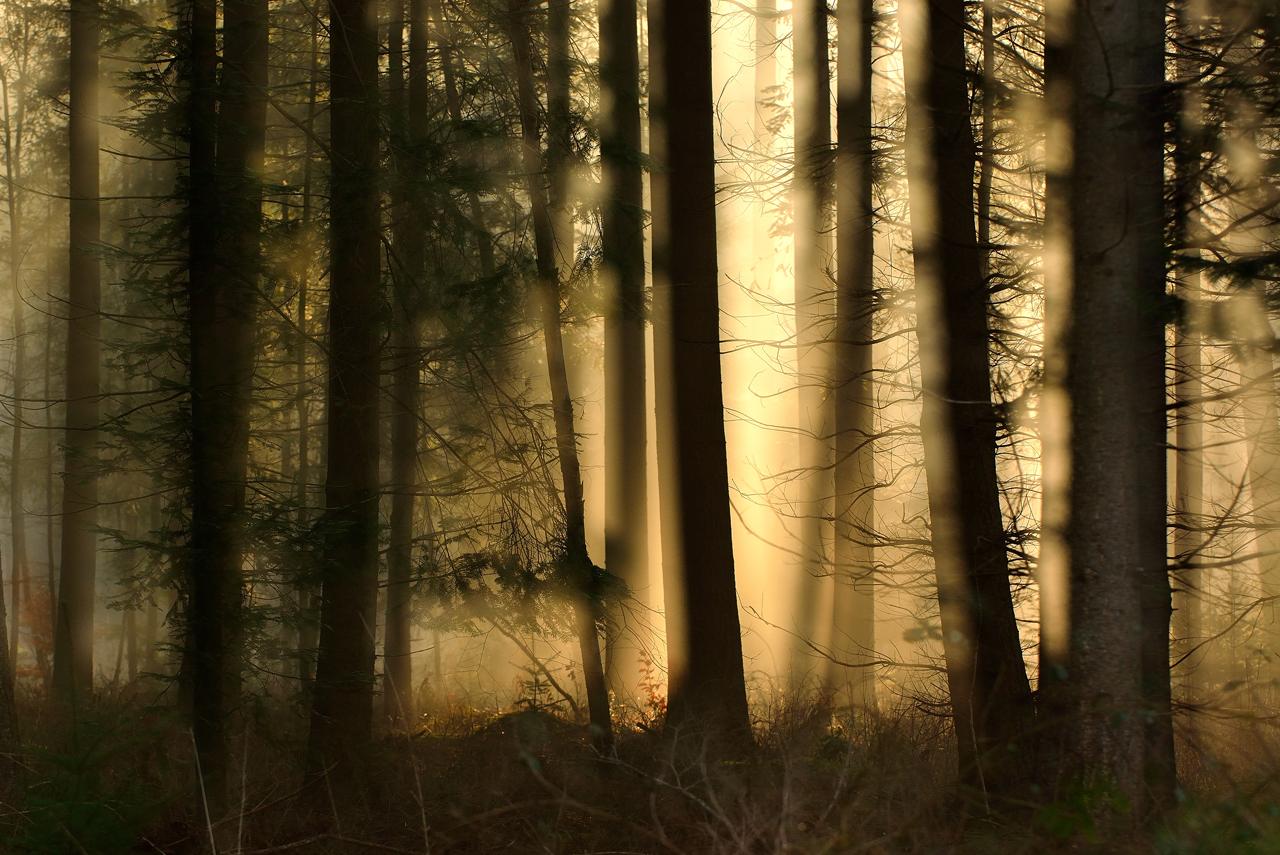 Morgens im Zauberwald II