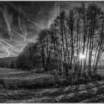 Morgens in den Wiesen 2