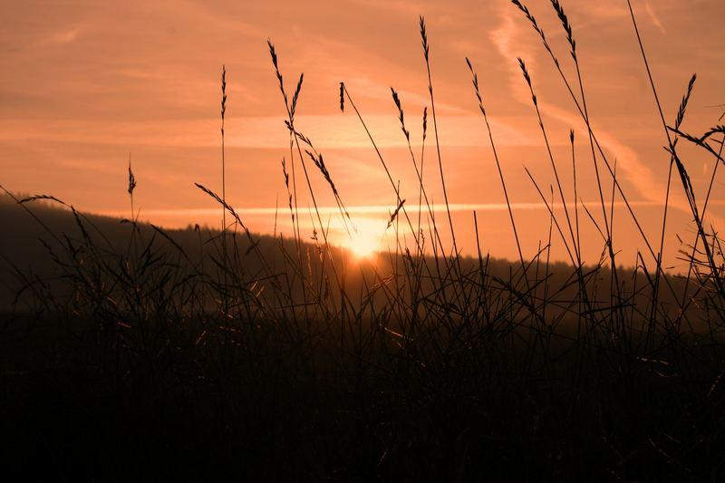 Morgens in der Wiese