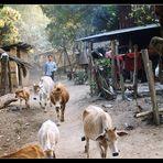 Morgens in einem Karen Dorf...