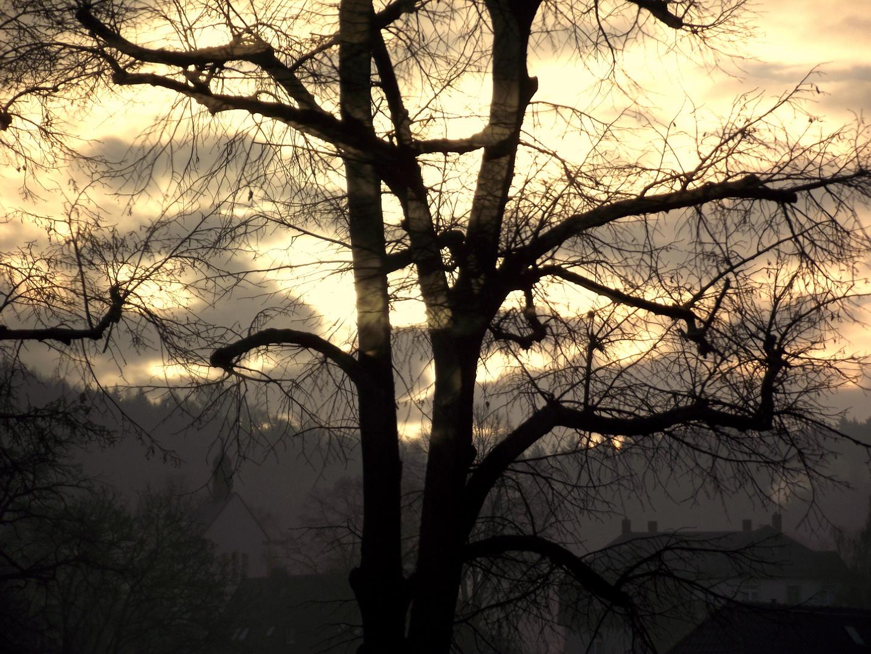morgens in falkenau