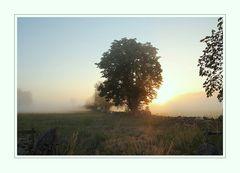 Morgens in Schonen