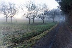 Morgens mit Hund unterwegs 7