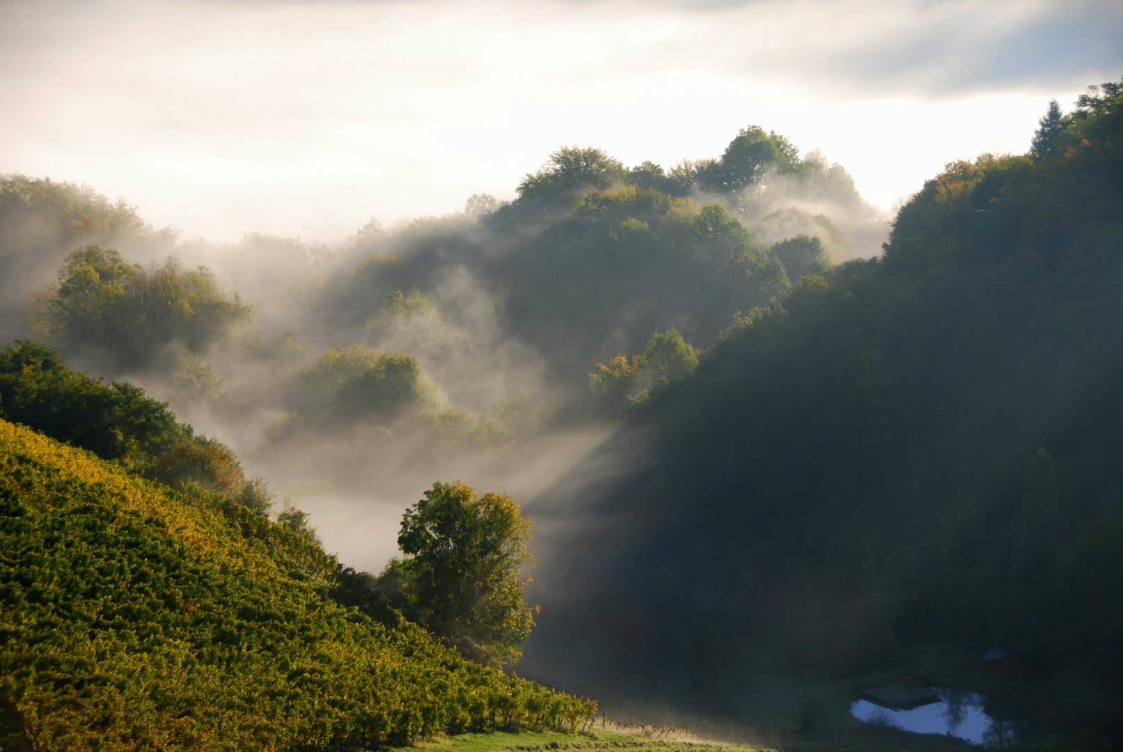 Morgensonne gegen Nebelschwaden