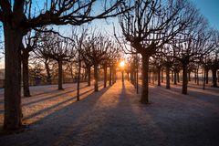 Morgensonne im Park