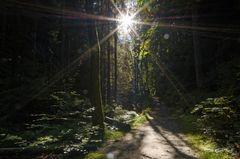 Morgensonne im Schluchtwald
