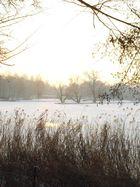 Morgensonne VII