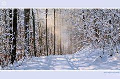 Morgenspaziergang im Wald