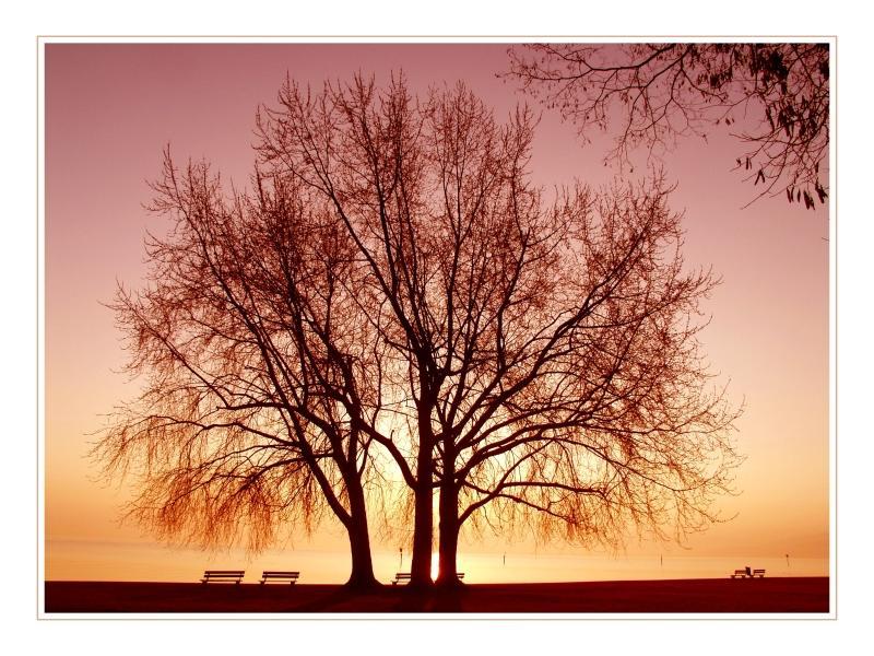 Morgenstimmung am Bodensee