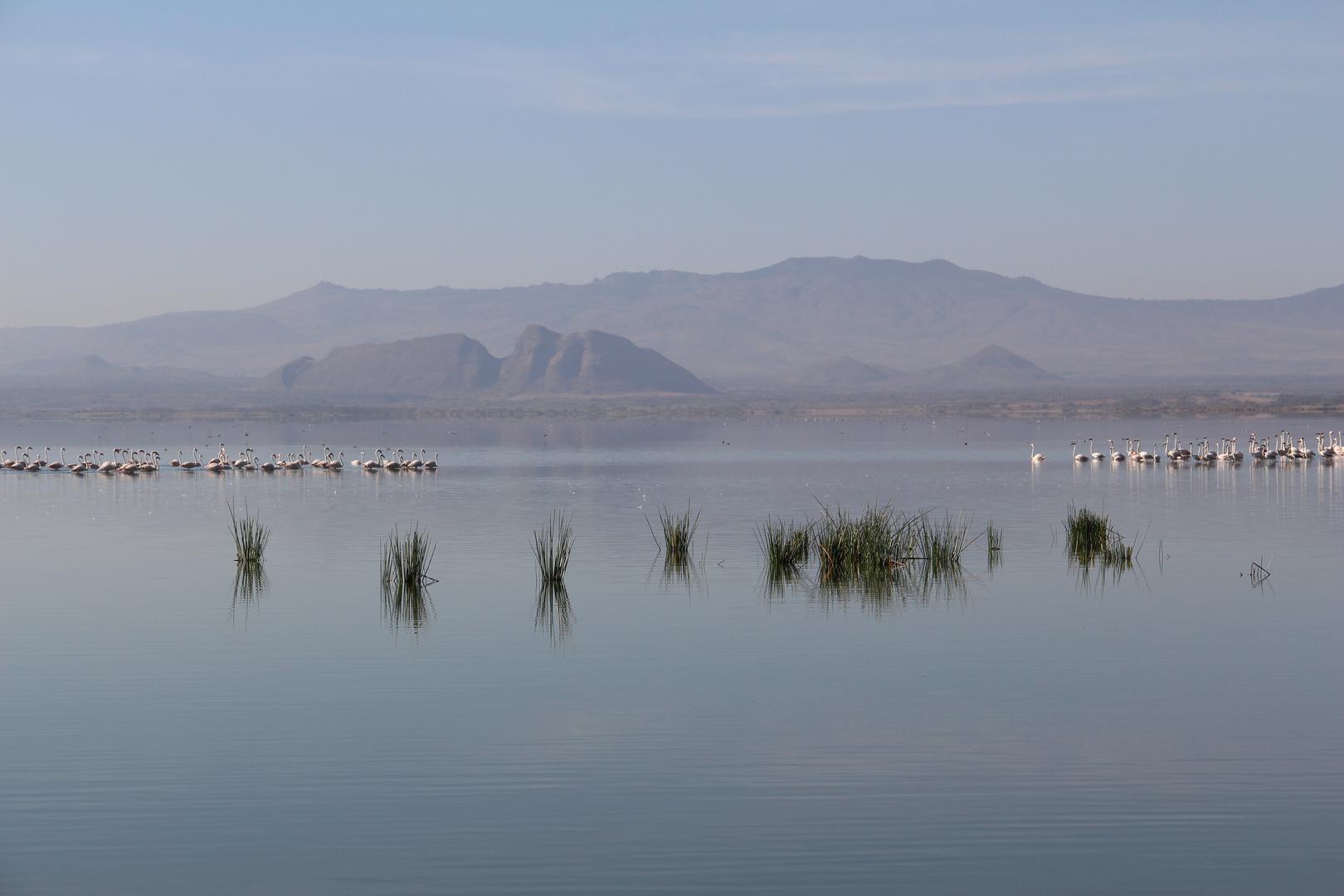 Morgenstimmung am Lake Elementaita