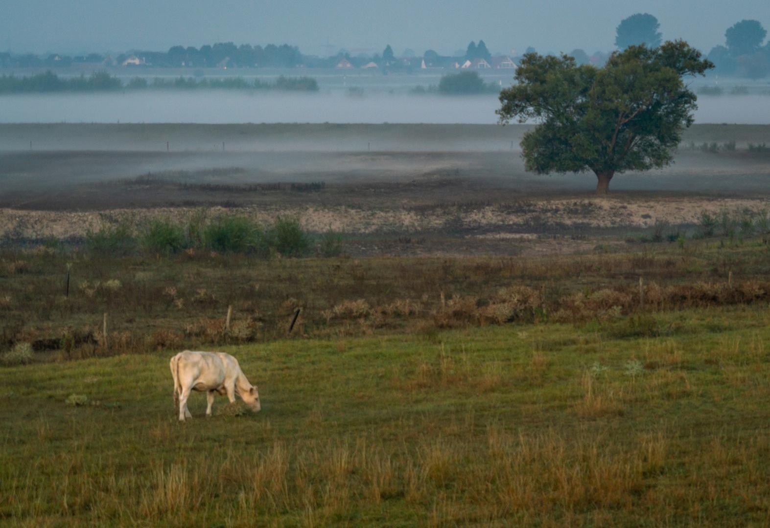 Morgenstimmung am Niederrhein