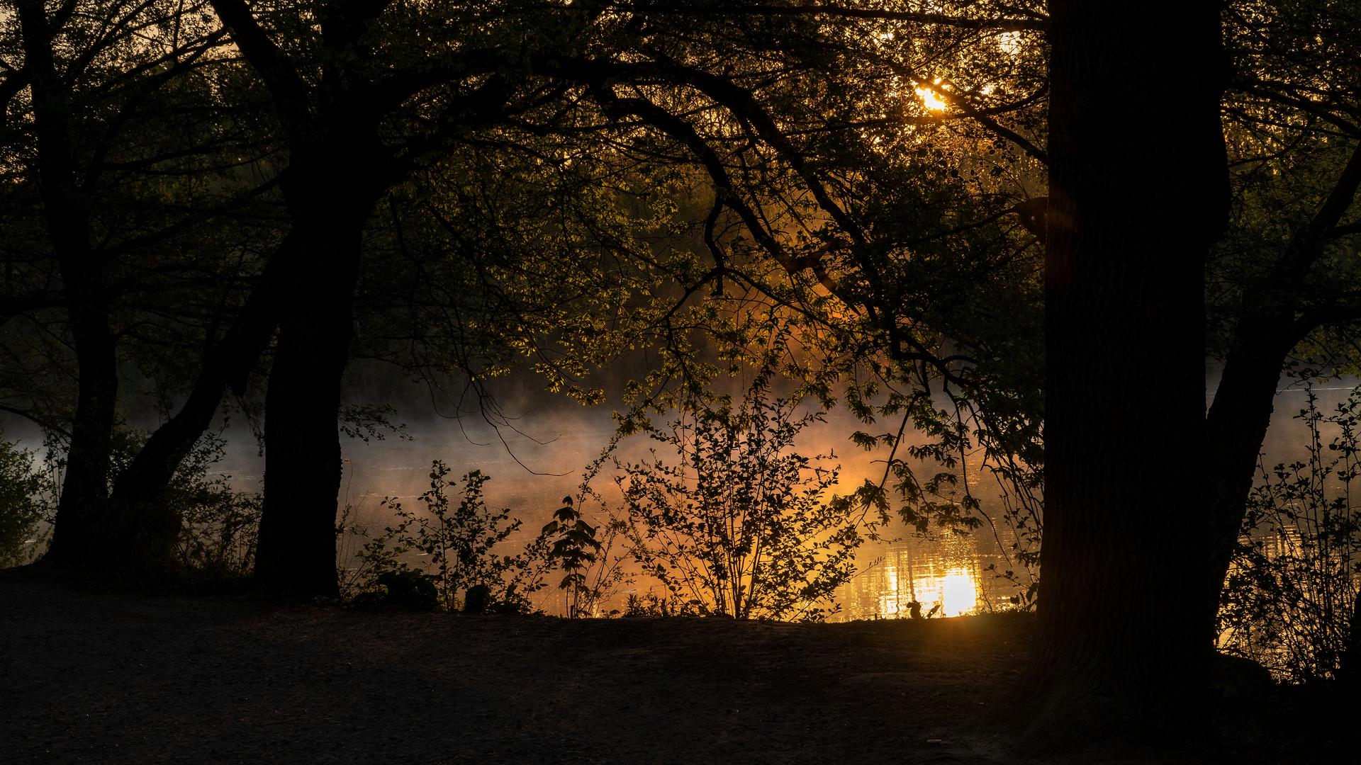 Morgenstimmung an den Kreuzteichen in Riddagshausen (3)
