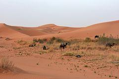Morgenstimmung im großen Dünengebiet Erg Chebbi