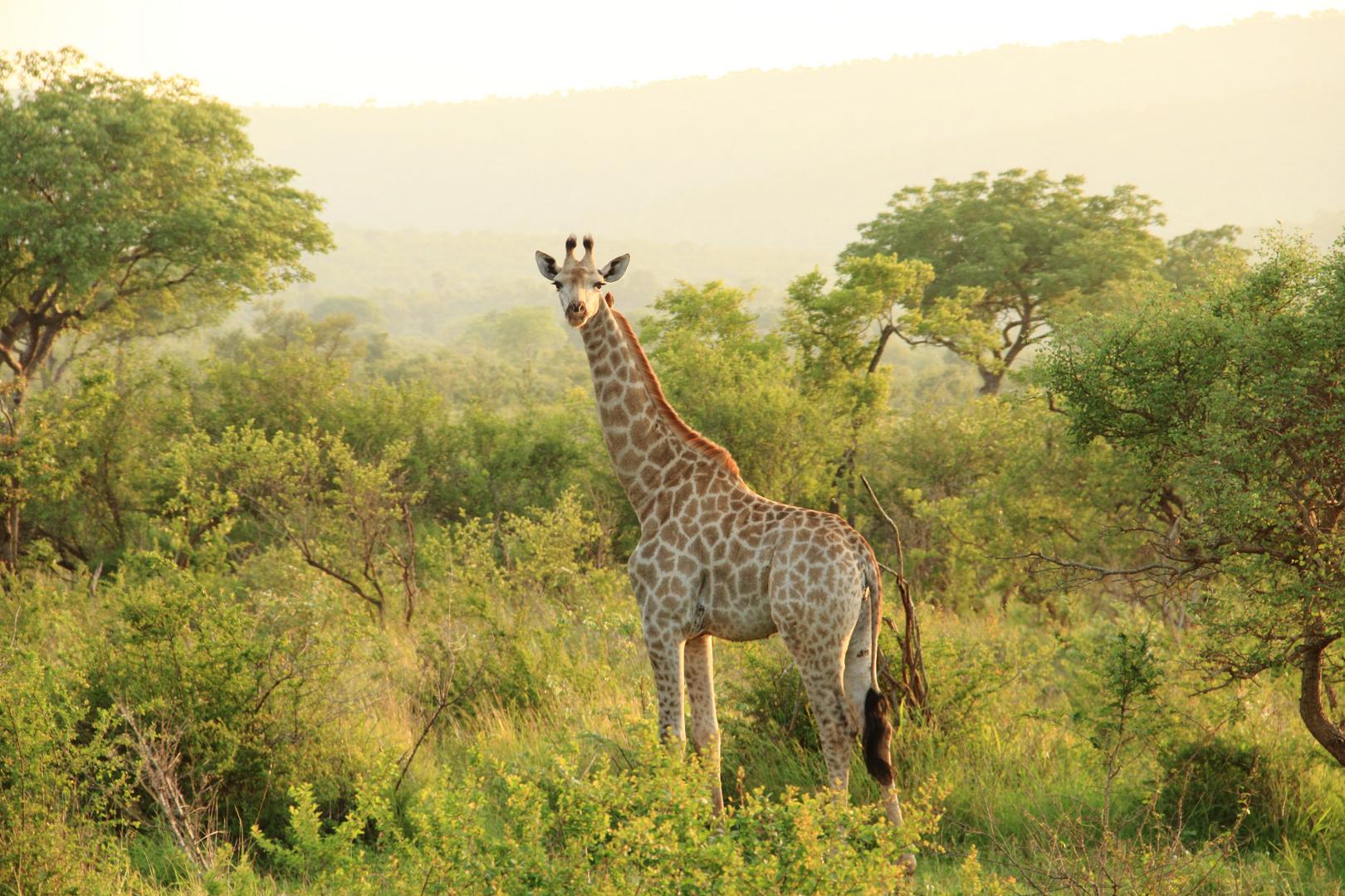 Morgenstimmung im Krüger-Nationalpark