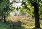 Morgenstimmung in der Heide bei Undeloh-Wesel