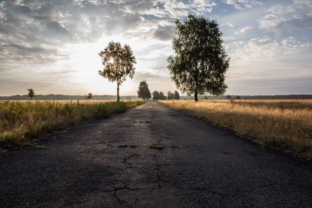 Morgenstimmung in der Lüneburger Heide