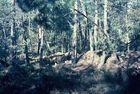 Morgenstimmung in Fontainebleau