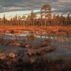 Morgenstimmung, Moor in Schweden