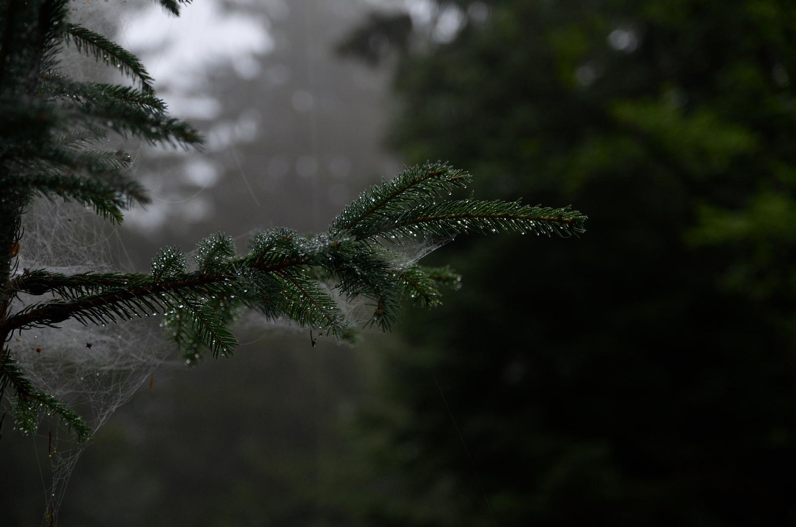 Morgenstimmung Urwald Sababurg
