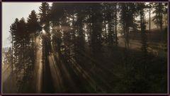 Morgenstund, der Nebel geht die Sonne kommt!