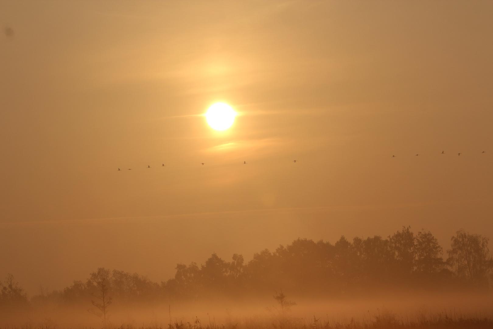 Morgenstund hat Gold...