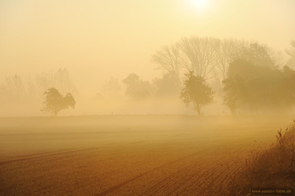 Morgenstund hat ... Nebelschwund ;-)