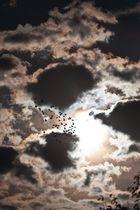 Morgenstund hat Tauben vor der Linse
