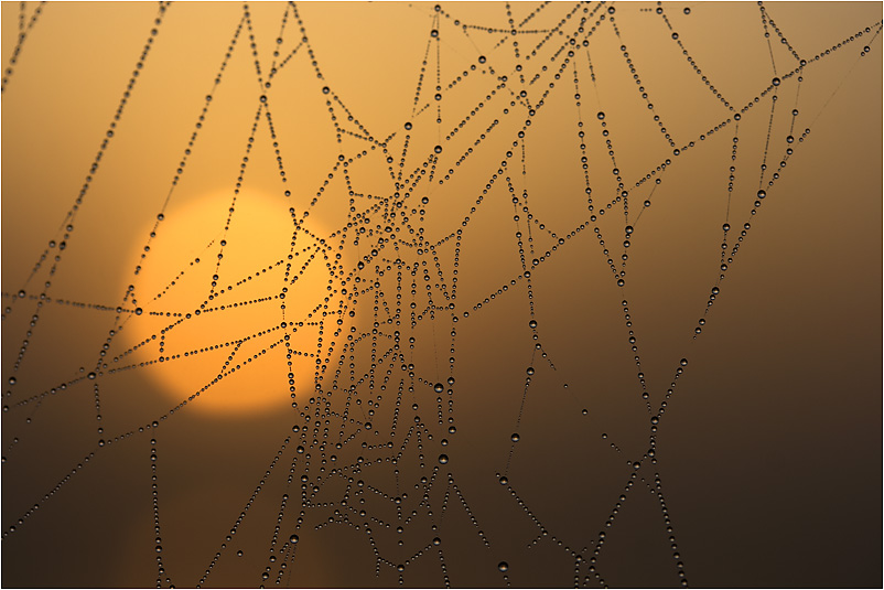 Morgentau bei Sonnenaufgang