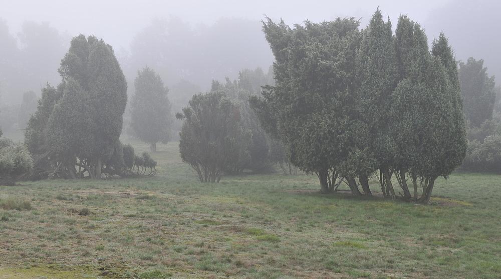 Morgentau in der Westruper Heide in Haltern am See 2