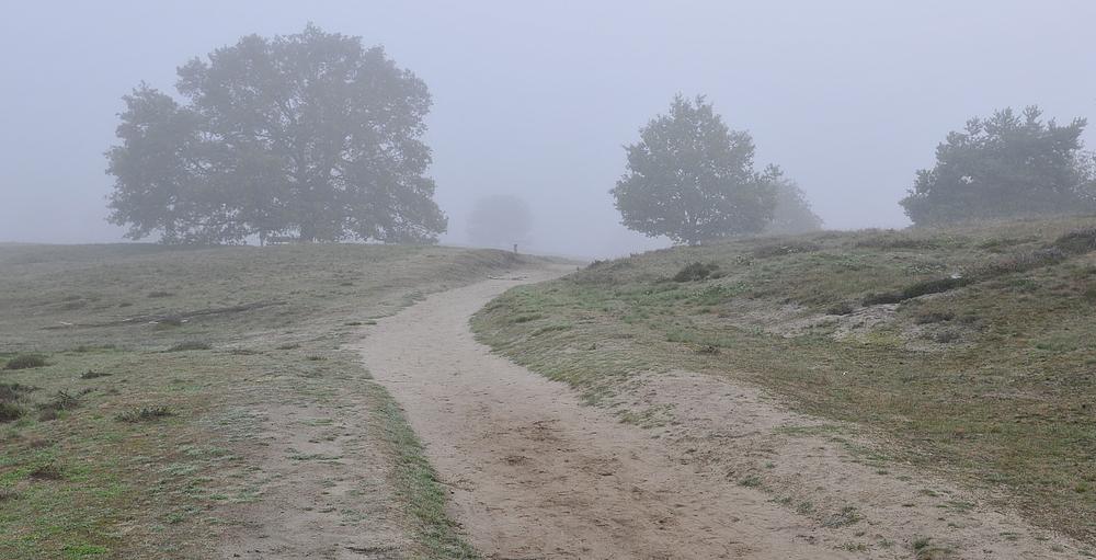 Morgentau in der Westruper Heide in Haltern am See 3