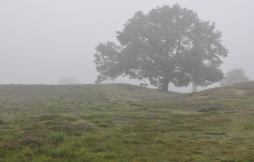 Morgentau in der Westruper Heide in Haltern am See