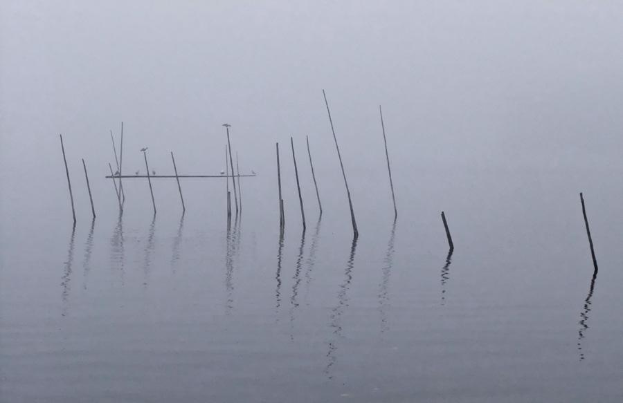 Morgentlicher Nebel auf der Müritz