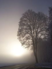 Morgentlicher Nebel