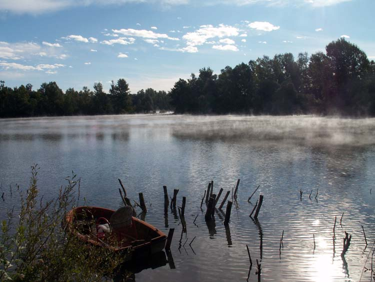 Morning at the fish pond
