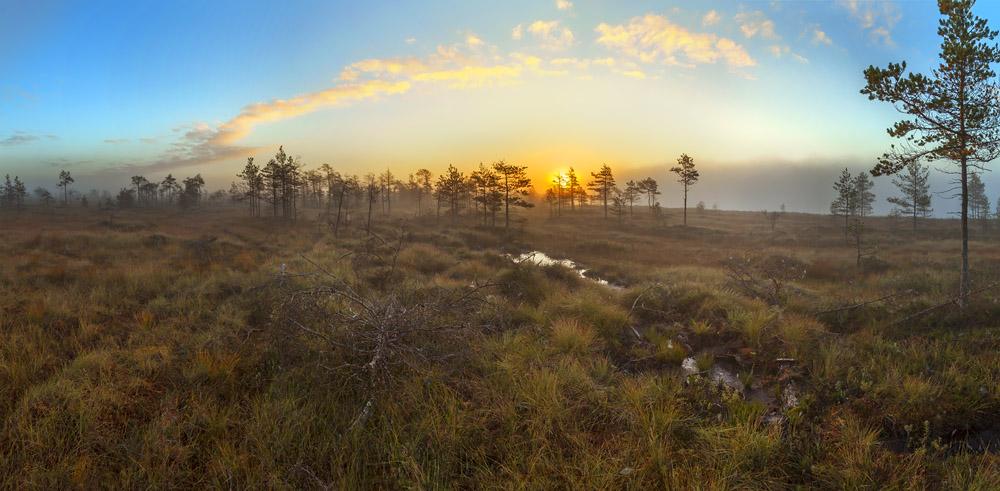"""Morning at the swamp"""