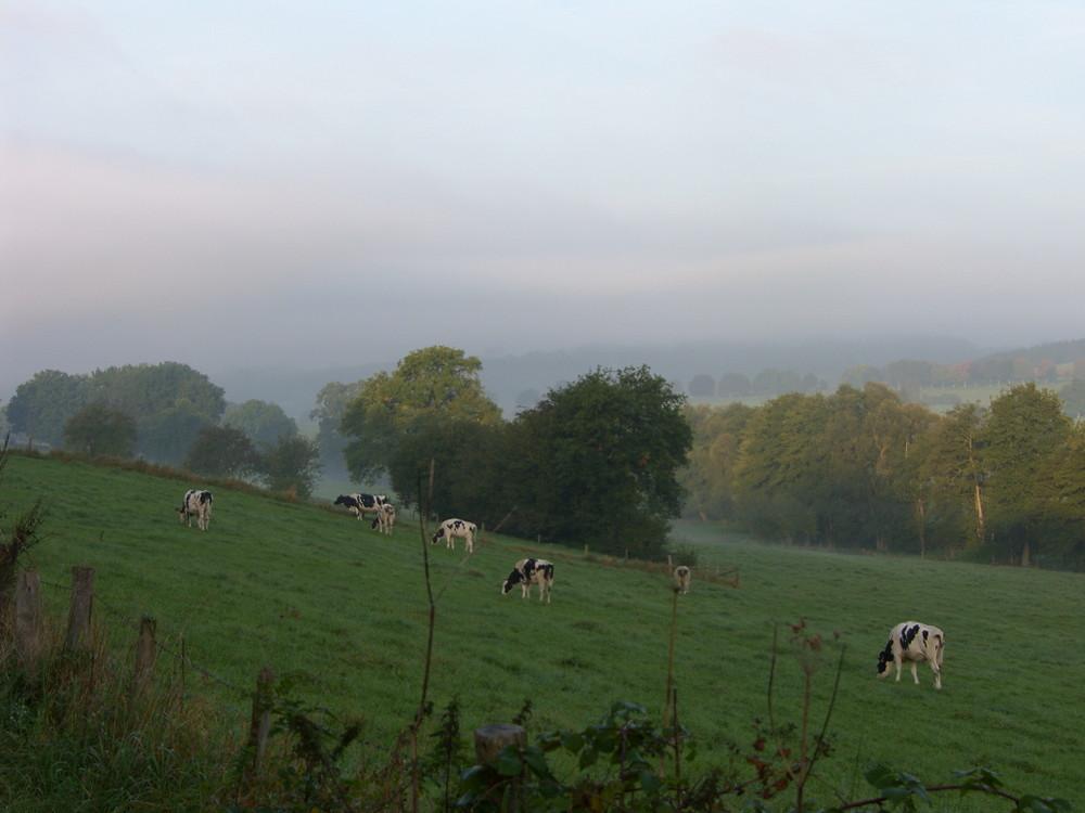 Morning dawn