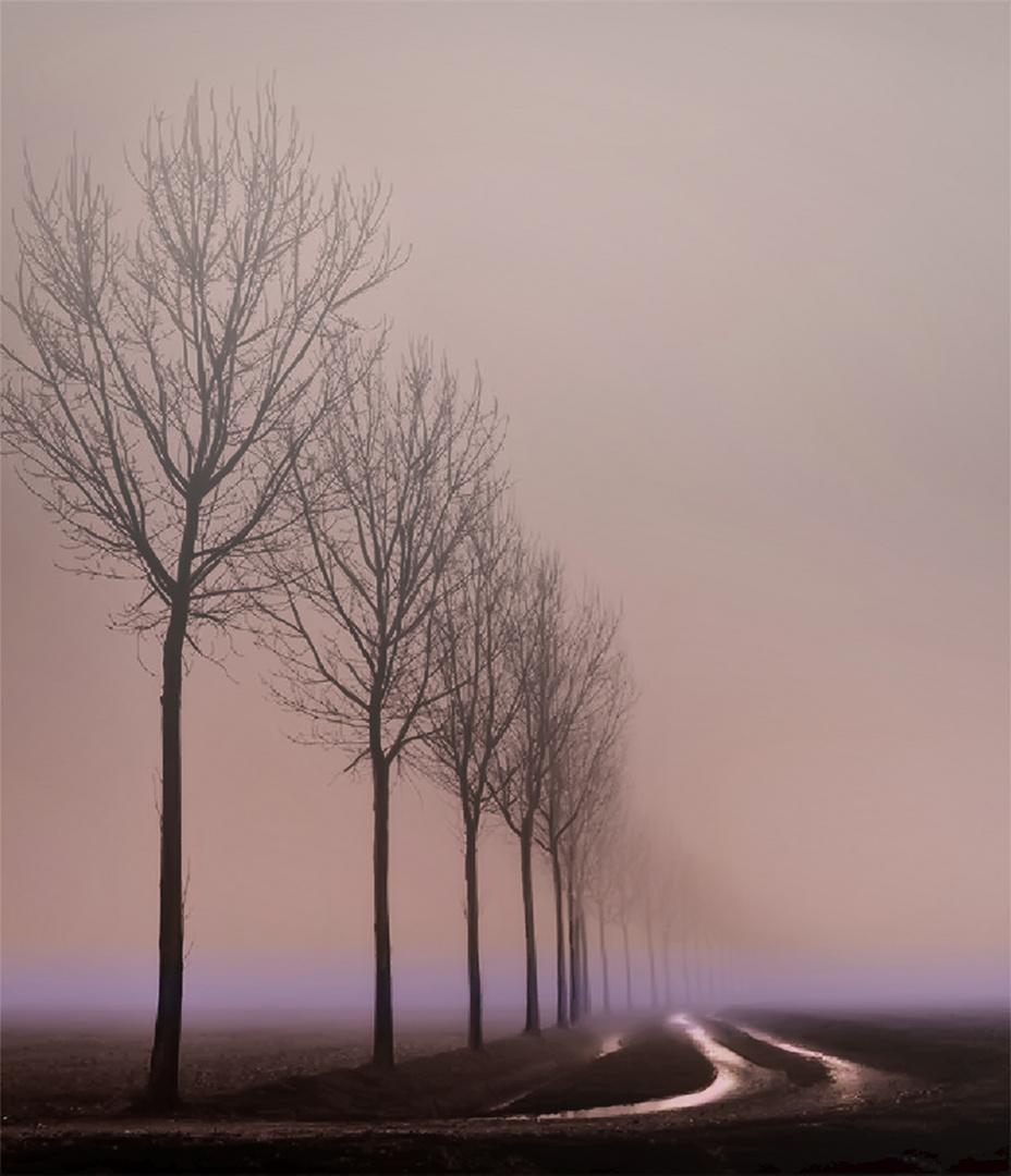 Morning Fog, Springtime