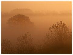 Morning Fog#1