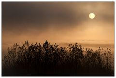 Morning Fog#2
