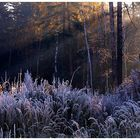 Morning frost in a forest