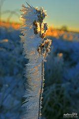 -Morning frozen-
