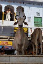 Morning in Pushkar