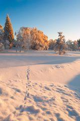 morning snow II