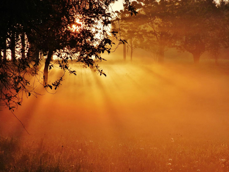 Morning sun II